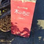 行列が出来るクレープ屋さん『木いちご』高崎市